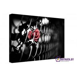 Колючая роза - Модульная картины, Репродукции, Декоративные панно, Декор стен
