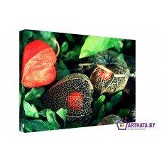Картина на холсте по фото Модульные картины Печать портретов на холсте Сухие цветы
