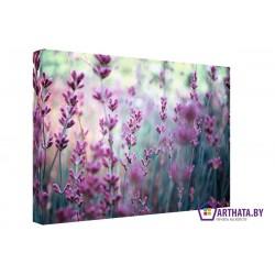 Полевые цветы - Модульная картины, Репродукции, Декоративные панно, Декор стен