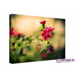 Фото на холсте Печать картин Репродукции и портреты - Луговые цветы