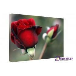 Фото на холсте Печать картин Репродукции и портреты - Алая роза