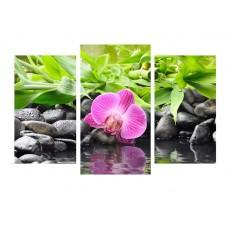 Картина на холсте по фото Модульные картины Печать портретов на холсте Орхидея в камнях