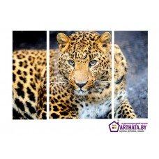 Картина на холсте по фото Модульные картины Печать портретов на холсте Леопард