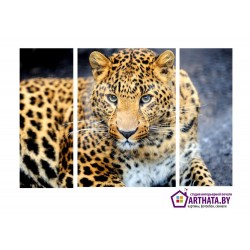 Леопард - Модульная картины, Репродукции, Декоративные панно, Декор стен