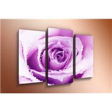 Картина на холсте по фото Модульные картины Печать портретов на холсте Модульная картина на  акриле - m-000278
