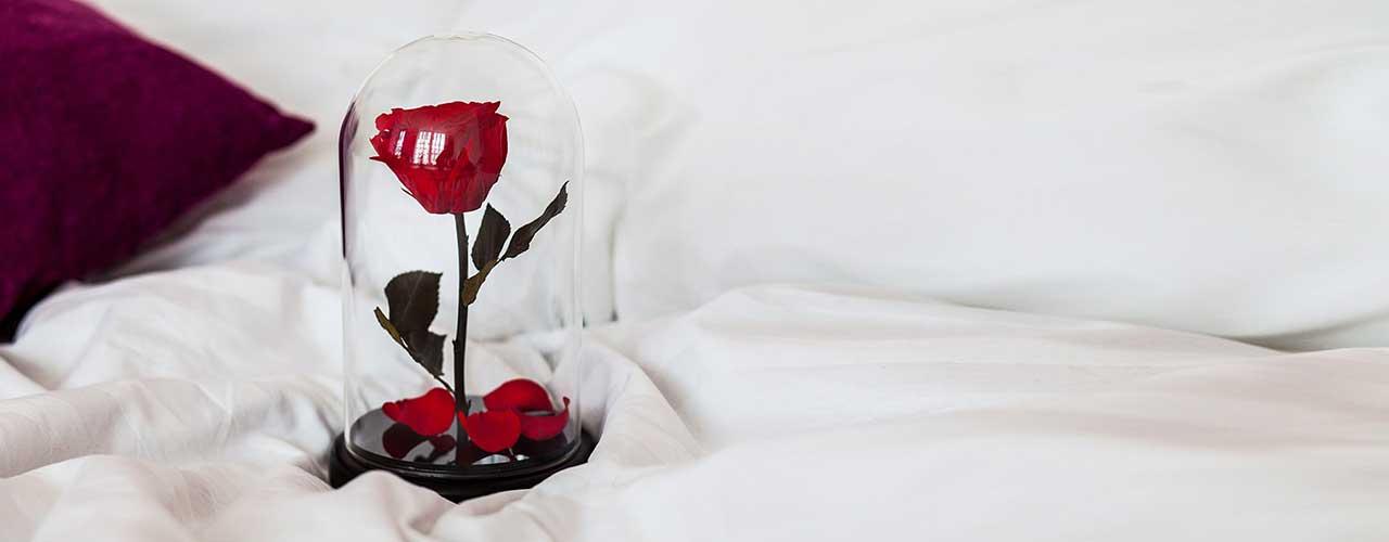 Картинки по запросу роза под колбой