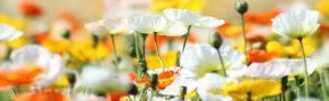 cvety-0039