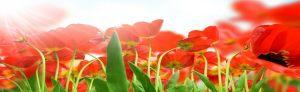 cvety-0059