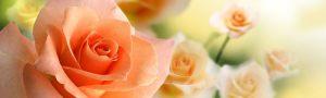 cvety-0151