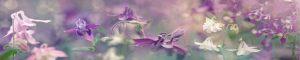 cvety-0325