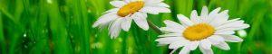 cvety-0355