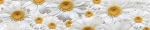 cvety-0358