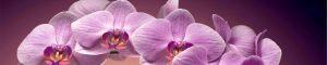 cvety-0431