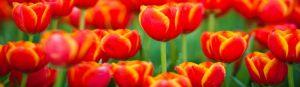cvety-0022