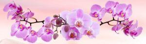 cvety-0026
