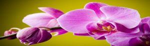 cvety-0033