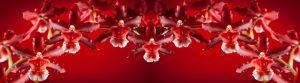 cvety-0051