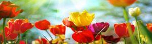 cvety-0058
