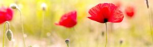 cvety-0062