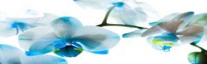 cvety-0092