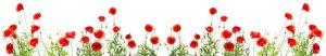cvety-0103