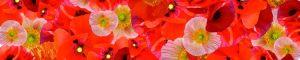 cvety-0105