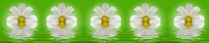 cvety-0130
