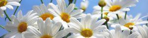 cvety-0132