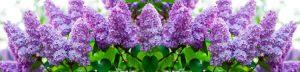 cvety-0152