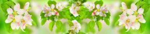 cvety-0193