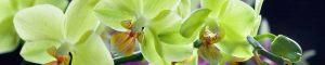 cvety-0290