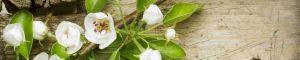 cvety-0308