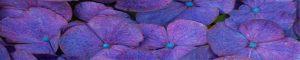cvety-0320