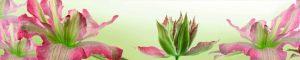 cvety-0343
