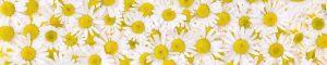 cvety-0354