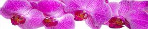 cvety-0385