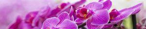 cvety-0430