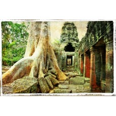 Фотообои - Корни дерева