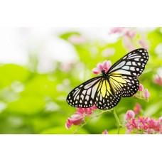 Фотообои - Прекрасная бабочка