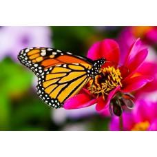 Фотообои - Опыление цветка