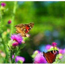 Фотообои - Две бабочки