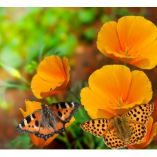 Фотообои - Желтые цветы