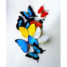 Фотообои - Цветные бабочки