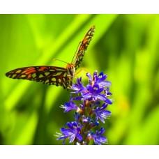 Фотообои - Бабочка и цветы