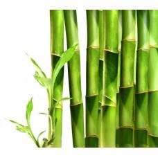 Фотообои - Бамбуковая ограда
