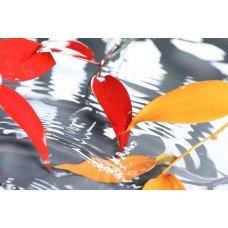 Фотообои - Красно-желтые листья над водой