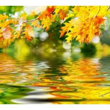 Фотообои - Отражение листвы