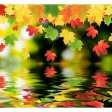 Фотообои - Осенний листопад