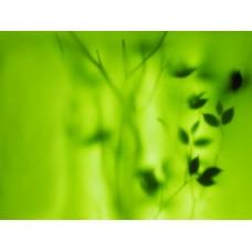 Фотообои - В гуще трав
