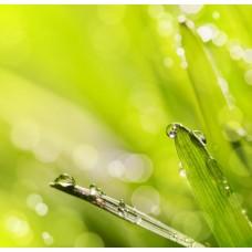 Фотообои - Капли росы на траве